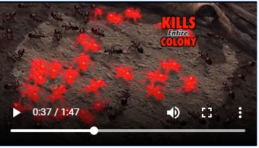 Ant Doctor claims to kill the entire Ant Colony including the Queen